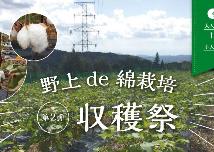 11/3(日)野上de綿栽培 第2弾 綿の収穫祭