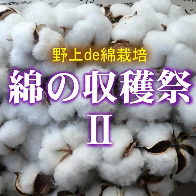 【12月15日】野上de綿栽培 綿の収穫祭Ⅱ