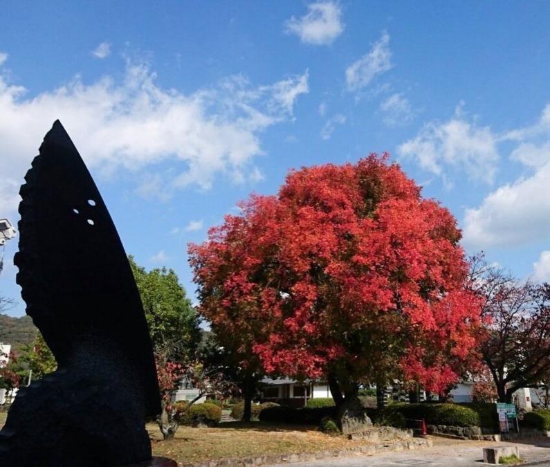 田中苑の楷の木の紅葉