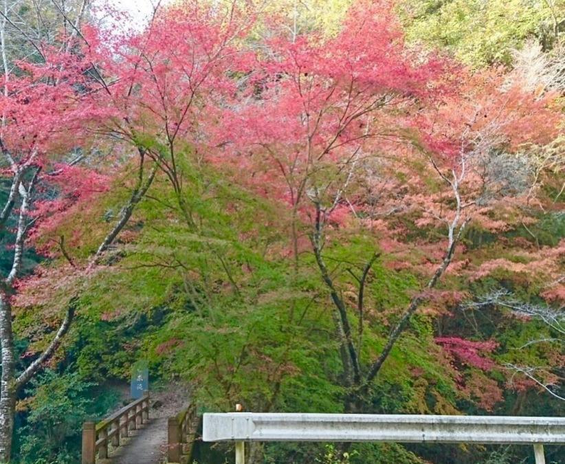 [美星町]白糸の滝の紅葉
