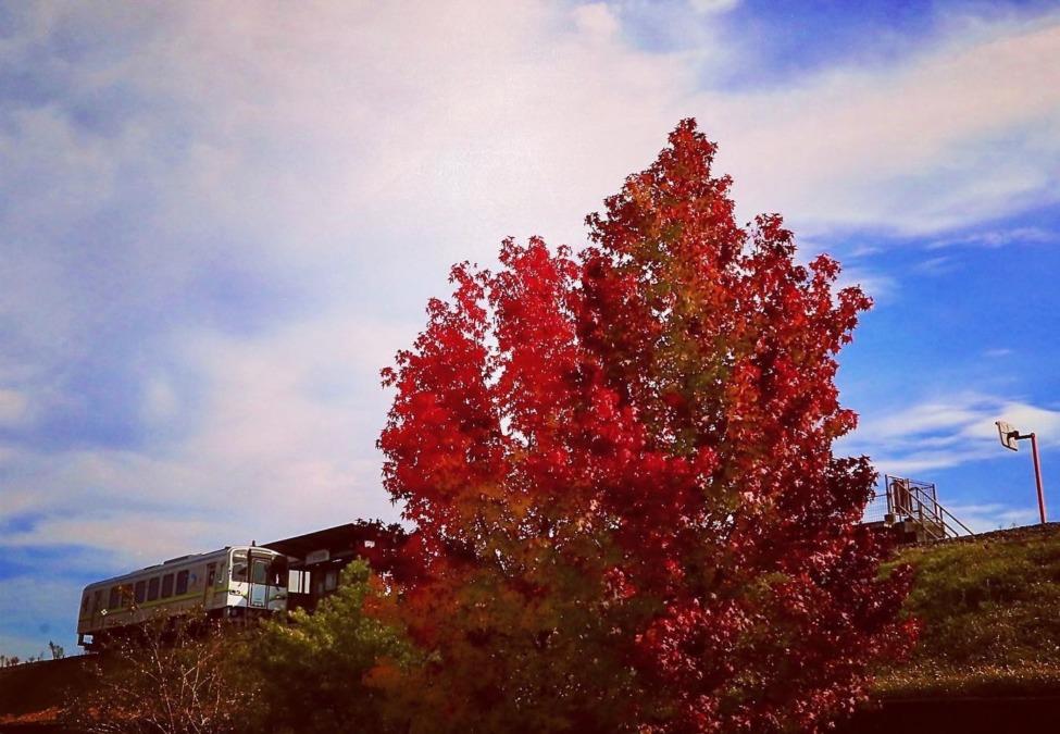 沿線の樹々も少しずつ色づき始めました