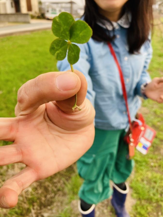西江原の畑で四つ葉のクローバー発見!