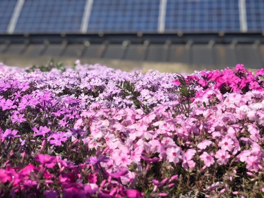 色々な花が咲いています