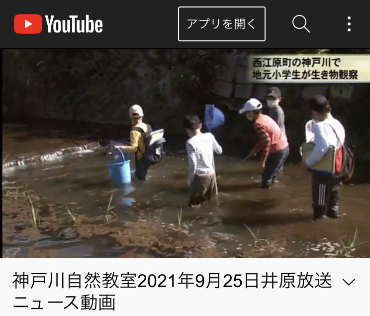 西江原地区神戸川自然教室、9月25日井原放送ニュース動画❗️